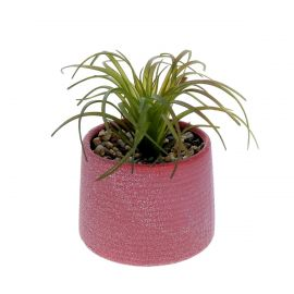 Petite plante en pot brique